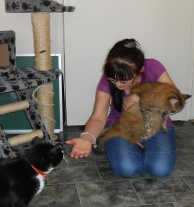 cats love stay at home care