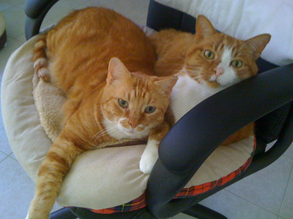 Pet Home Care